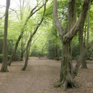 Whipps Cross / Epping Forest